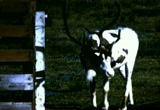 Still frame from: Home Movie: 98640: Miscellaneous, 1964
